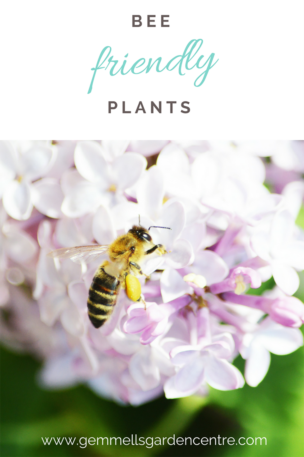 Bee Friendly Plants | Bee on a Lilac Bush