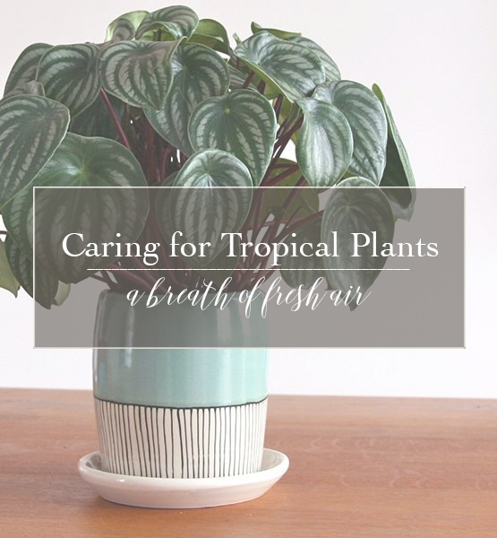 Caring For Tropical Plants Part - 24: A Breath Of Fresh Air | How To Care For Tropical Foliage Plants ?