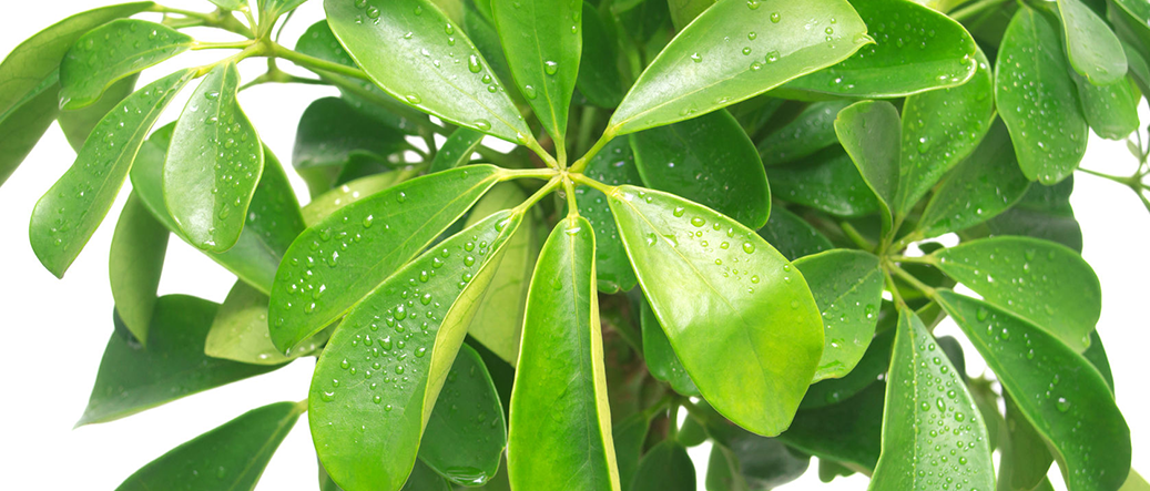 A Breath of Fresh Air | Tropical Foliage Plants