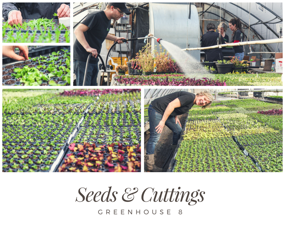 Seeds & Cuttings | Behind the Scenes of Greenhouse 8