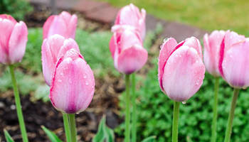 Spring has sprung and Gemmell's has all the helpful tips and advice to help you get your garden off to a stunning start right from the beginning.
