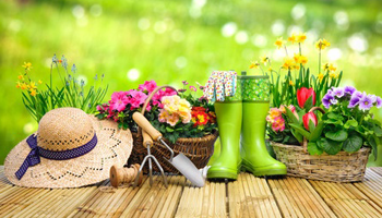 Novice gardener, or just starting out? Read on for our expert advice.