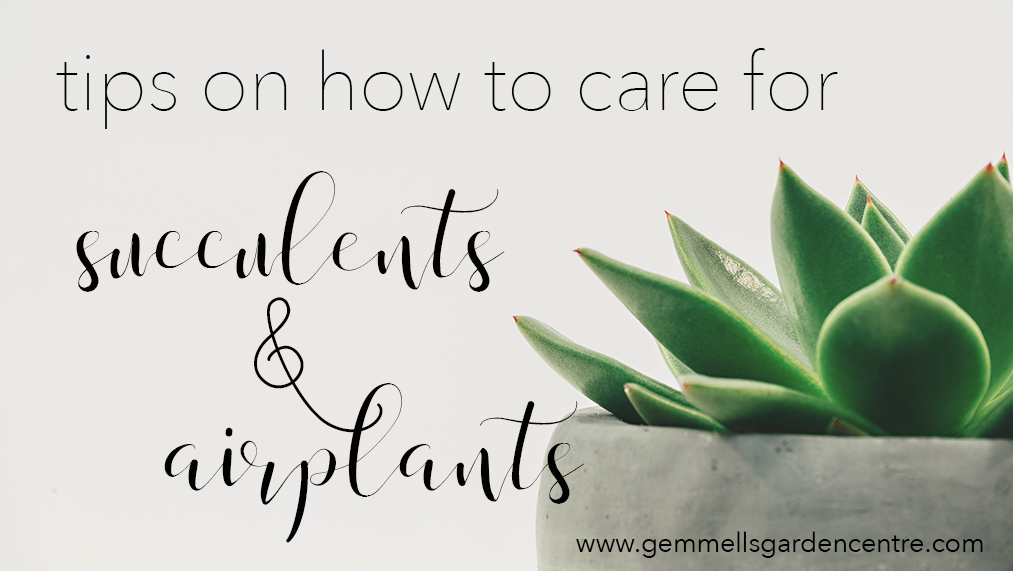 Tips on how to care for succulents & airplants | Ottawa Garden Centre