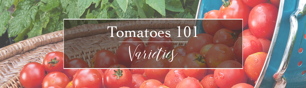 Helping you decide which variety of tomato is best for your needs.