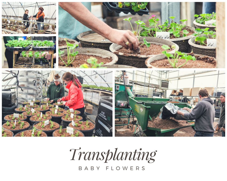 Transplanting the Baby Flowers March Break Students
