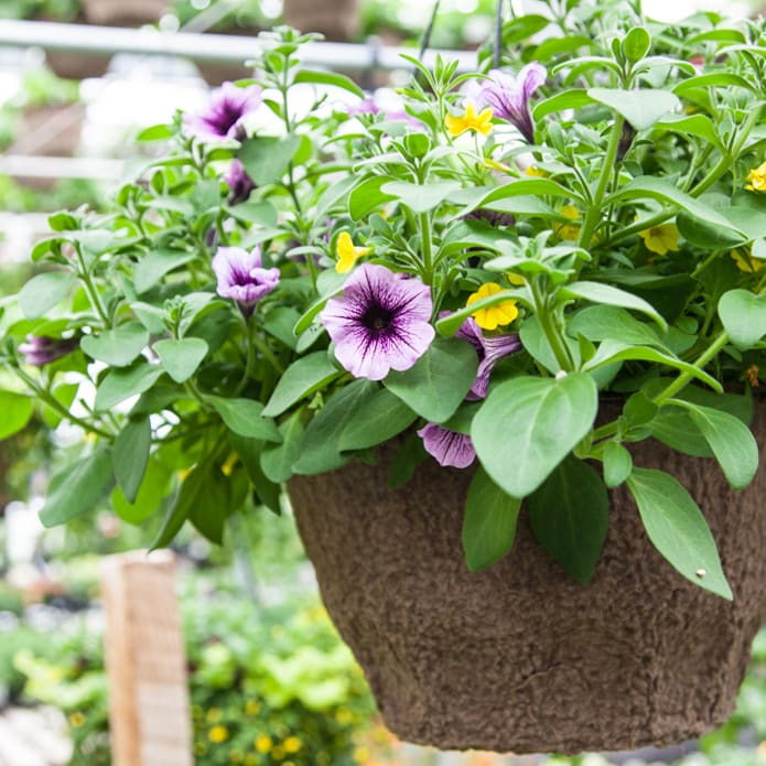 "10"" & 11"" Hanging Baskets 
