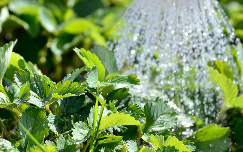 Proper Watering Techniques for Plants | Gemmell's Garden Centre